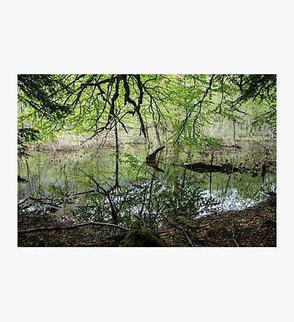Dense Everglades - Nature Photography Photographic Print