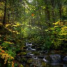 Some Light Some Shade by Charles & Patricia   Harkins ~ Picture Oregon