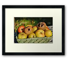 Basket of bad apples Framed Print