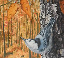 White-Breasted Nuthatch by Diane Kraus