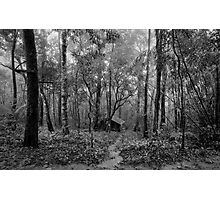lonely hut in deep forest Photographic Print