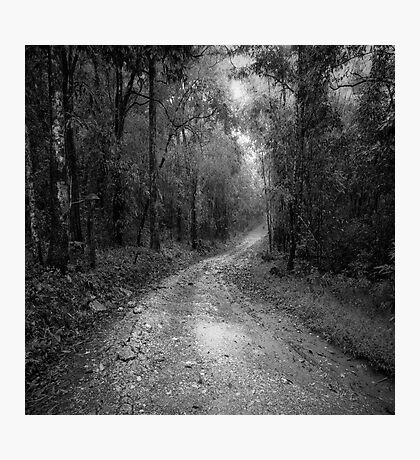 road way in deep forest Photographic Print