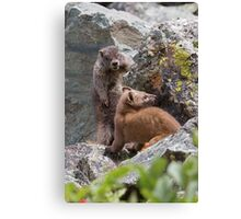 Marmot & Weasel Encounter Canvas Print