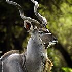 African Art Kudu by Leigh Diprose