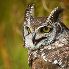 African Art Spotted Eagle Owl by Leigh Diprose