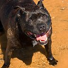 Beach Day - Staffordshire Bull Terrier by digihill