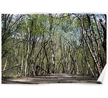 Tangled Forest - Nature Photography Poster