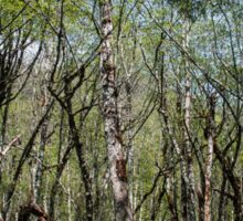 Tangled Forest - Nature Photography Sticker