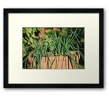 Pot of Chives Framed Print