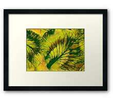Veins of a Cabbage Framed Print