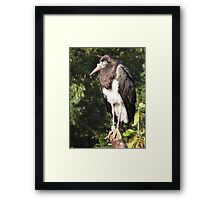 They dont call me Sly for nothing. Framed Print