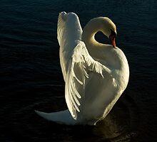 Swan Lake iPad Case by Catherine Hamilton-Veal  ©