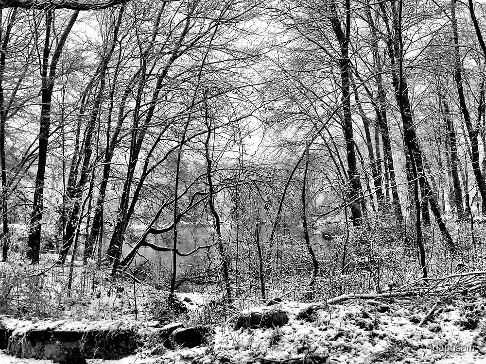 Snowy Woods by daphsam