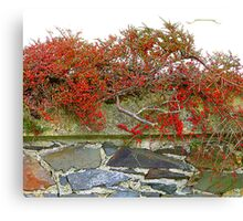 Red Berries On A Stone Wall Canvas Print
