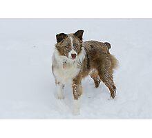 Snowdog Photographic Print