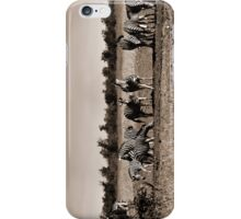 Wild Zebra iPhone Case/Skin