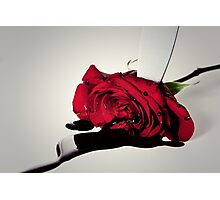 Murder of the Rose Photographic Print