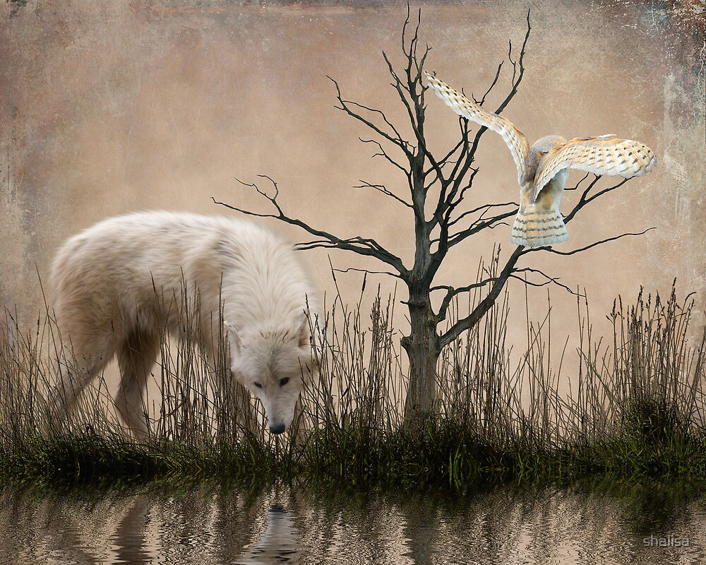 Woodland Wolf refelected by shalisa