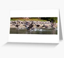 Canadian Geese taking flight, St. Lawrence River, Ontario Greeting Card