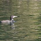 Loon by David Galson