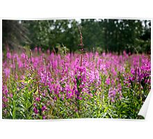 fireweed forrest 2 Poster