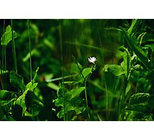 Green and White Photographic Print