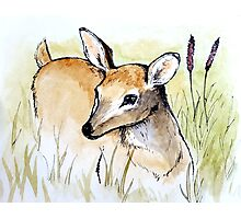 Doe in Tall Grass Photographic Print