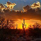 Desert Golden Rays by Saija  Lehtonen