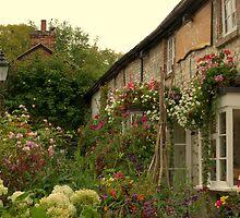 Avebury flowers by Sarah Williams
