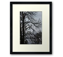 Almost Winter Framed Print