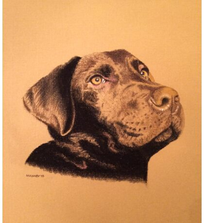 Nemo the beautiful brown labrador Sticker