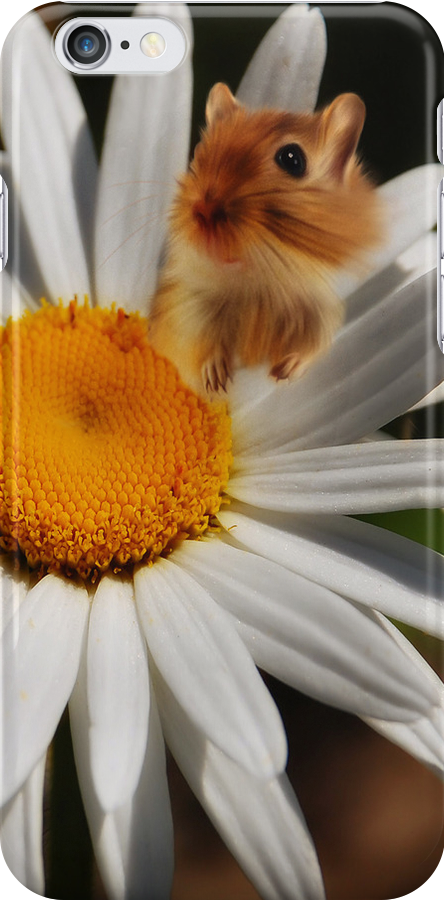 Daisy and Hampster iphone case  by Elaine  Manley