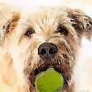 Wheaten Terrier - Let's Play by Sharon Cummings