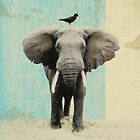 friends for life - elephant and a black bird by vinpez