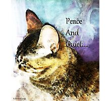 Cat Art - Peace And Quiet Photographic Print