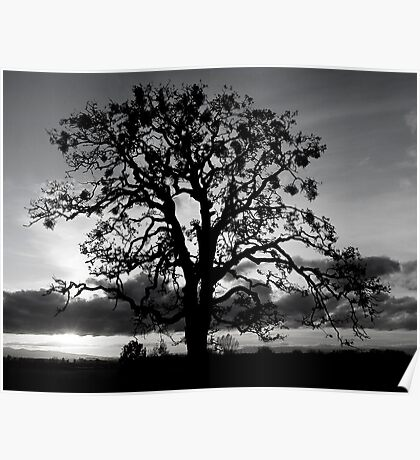 Lone Oak Silhouette Poster
