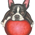 Morris (Boston Terrier) by Danny Gordon