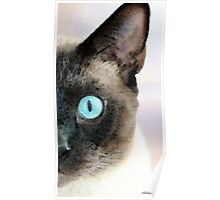 Siamese Cat Art - Half The Story Poster