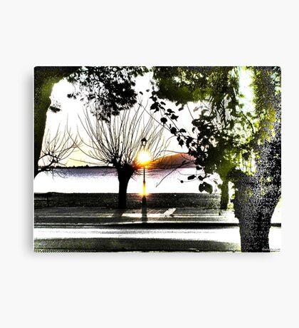 surrealistic arboreal morning Canvas Print