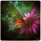 Butterfly Kisses by Rebecca Tolk