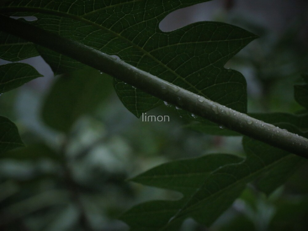 rainy song 2 by limon
