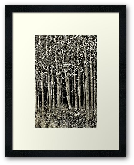 Cottonwood by Annie Lemay  Photography