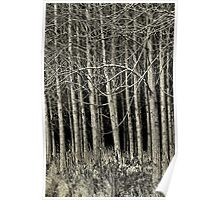 Cottonwood Poster