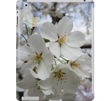 Cherry Blossoms 2 iPad Case/Skin