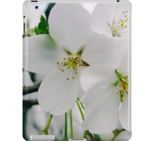 Cherry Blossoms 4 iPad Case/Skin
