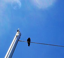 Crow Four - 09 11 12 by Robert Phillips