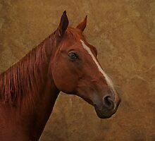 mare by lucyliu