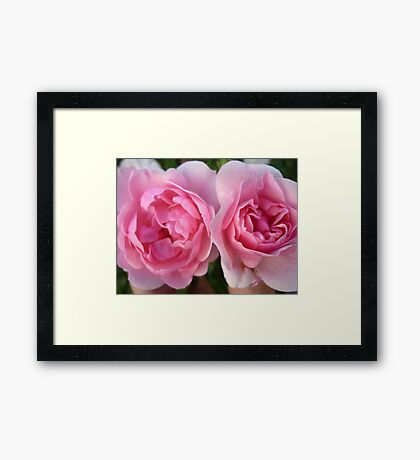 Two Deep Pink Roses Framed Print