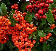 Christmas Berries by Angela Gannicott