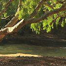 Hot Springs at Katherine  by myraj